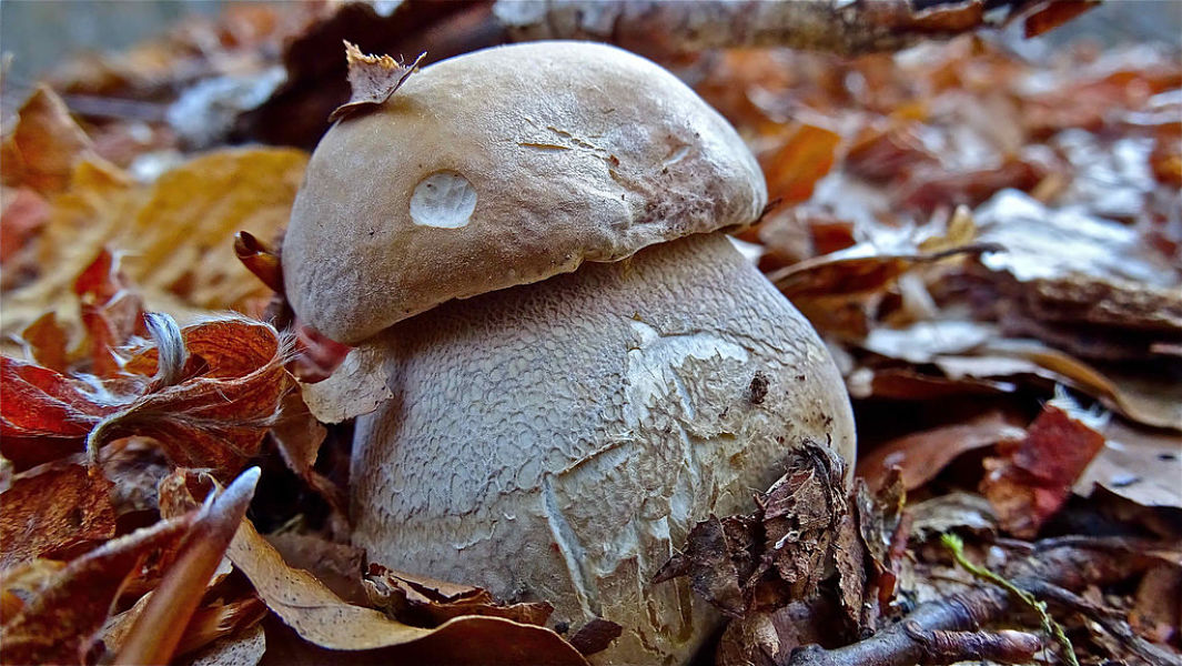Autunno sul Pollino, magico regno dei funghi