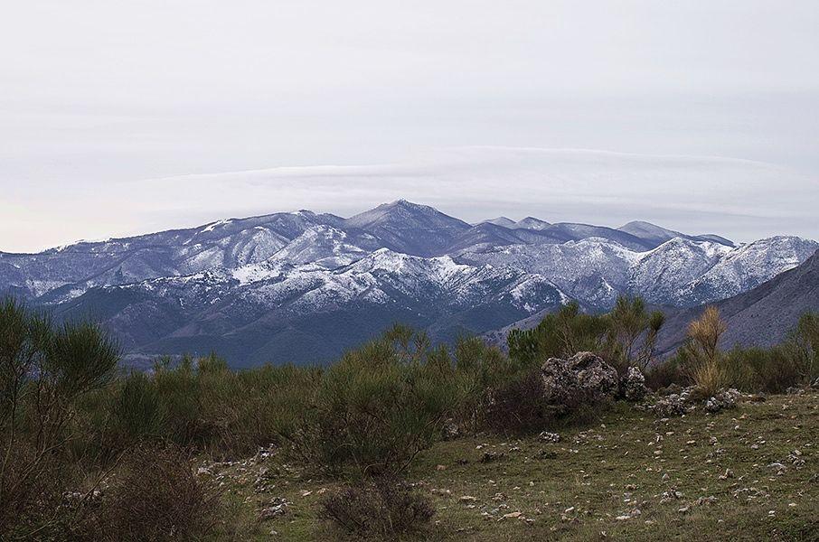 Cozzo Palumbo, Pollino