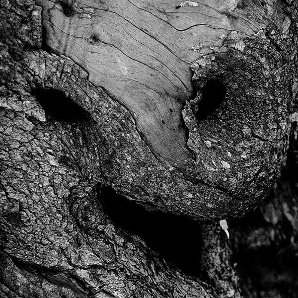 Gli ulivi metamorfici di Nicola Vigilanti