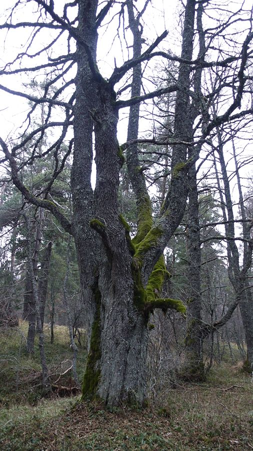 Sull'altopiano calabrese della Sila l'incanto della foresta della Fossiata