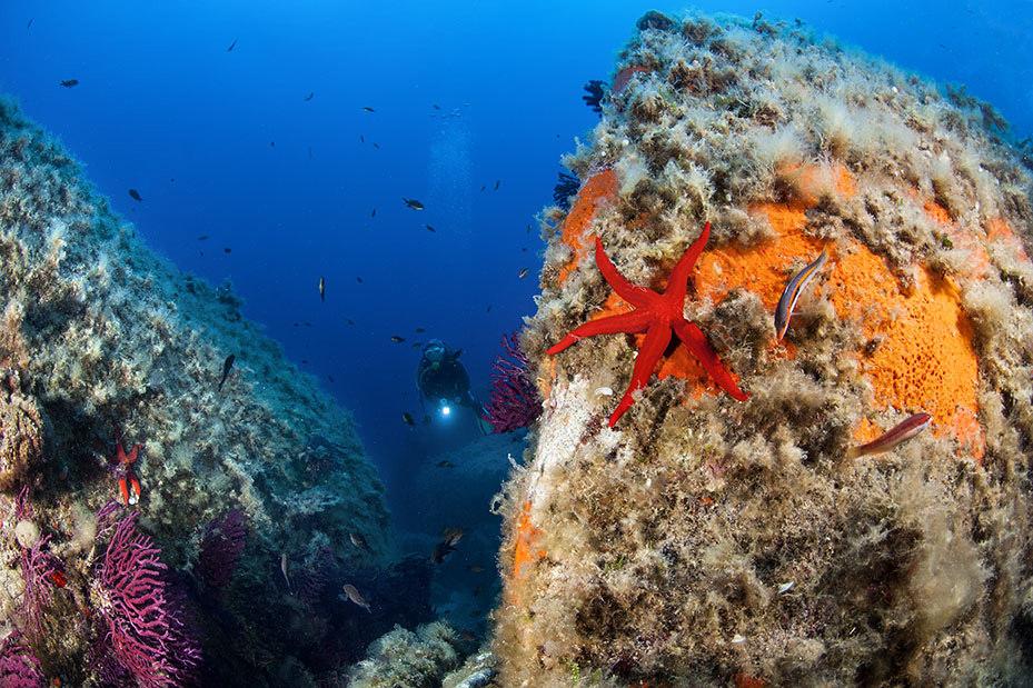 Fondale marino in Sardegna - Ph. Korra | CCBY-SA2.0