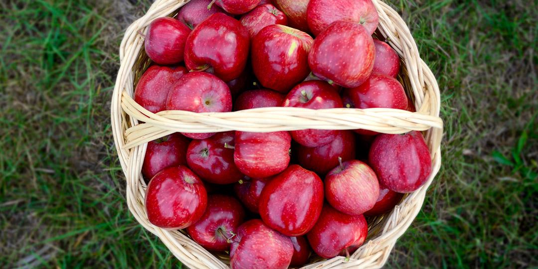 Frutti dal meleto biologico di Castel del Giudice (Is) - Ph. Borgotufi