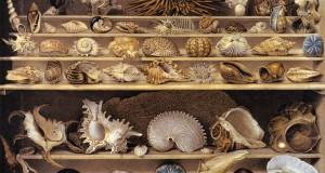 La più grande collezione di conchiglie del Sud. Cercasi nuova sede per farne un polo scientifico e un attrattore turistico