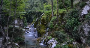 Fra boschi, torrenti, grotte, felci ed orchidee, alla scoperta di un altro Cilento