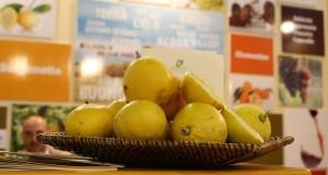 Bergamotto, l'essenza del SUD. Enigmi e rivelazioni in un convegno svoltosi a Bova Marina
