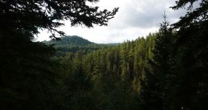 Sull'altopiano calabrese della Sila l'incanto della Fossiata