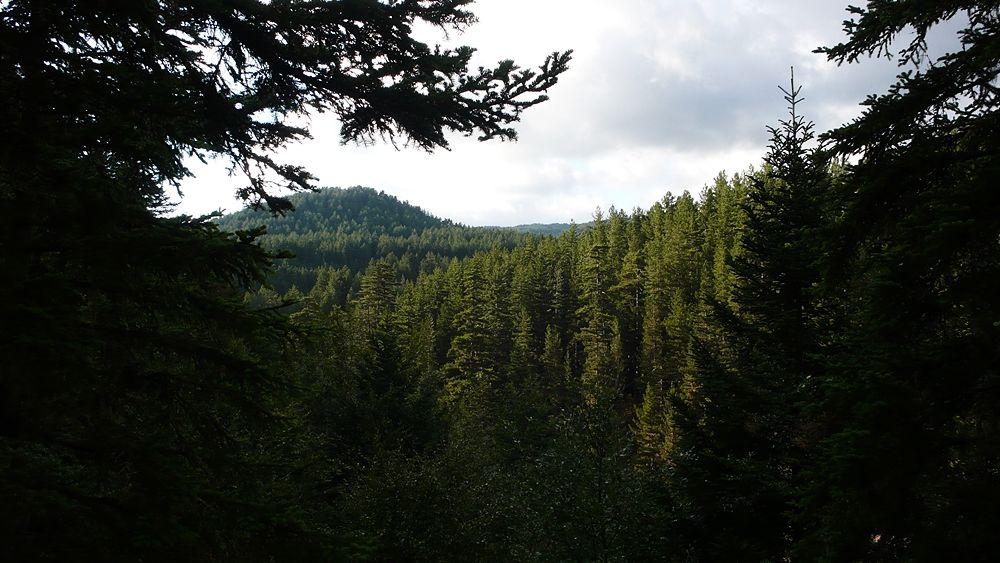 Calabria - Scorcio suggestivo della foresta della Fossiata, Parco Nazionale della Sila (Cs) - Ph. © Andrea Martini di Cigala