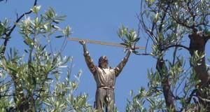 Parco della Biodiversità Mediterranea. Il cuore verde di Catanzaro: felice connubio di arte e natura | PHOTO GALLERY