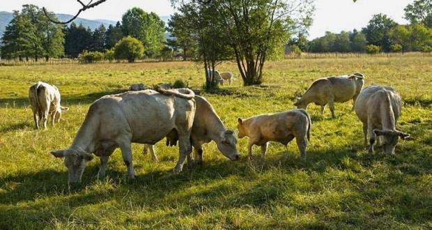 Scoperte nel Sud Italia le più antiche tracce di formaggi