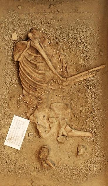 Lo scheletro di Avignone, V millennio a.C. - Ph. © Aurélie Zemour