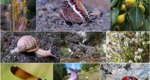 Biodiversità nel Sud Italia