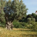 La Valle dei Templi di Agrigento rappresenta l'Italia al Premio del Paesaggio del Consiglio d'Europa