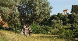 Porte aperte in giardini e parchi d'Italia: tutte le location del Sud
