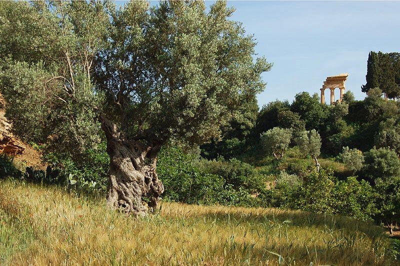 Il Giardino della Colymbetra, Valle dei Templi, Agrigento