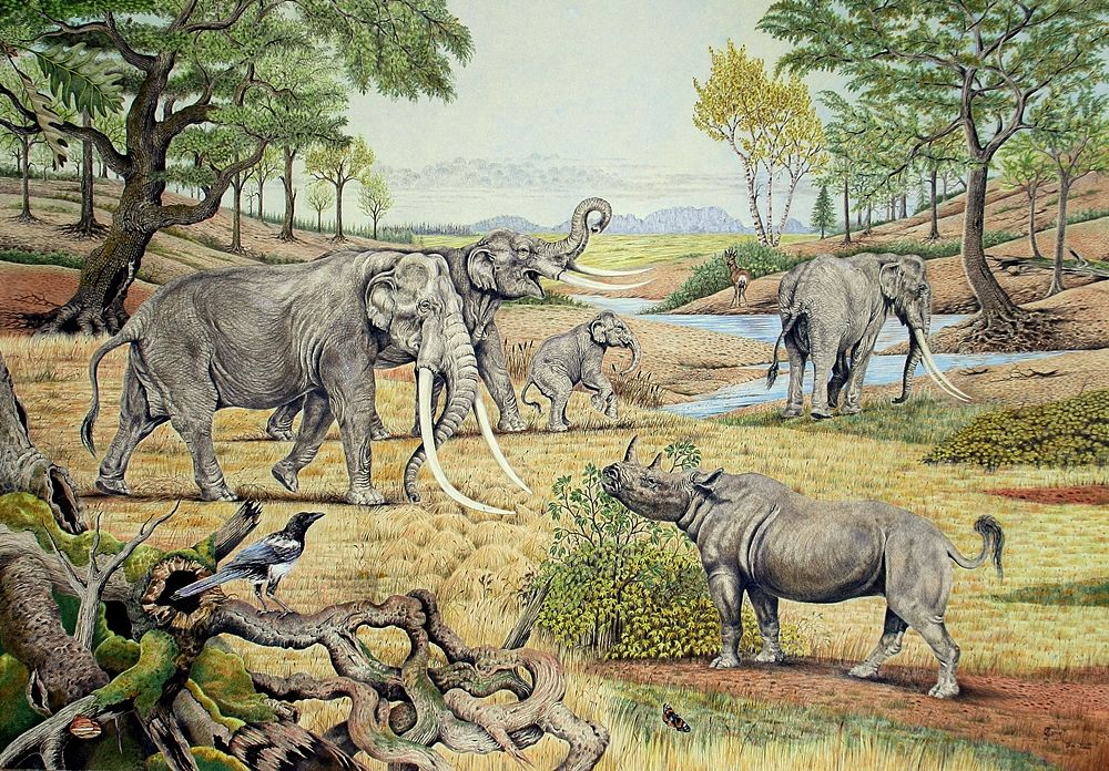 elephas antiquus_contesto_opt