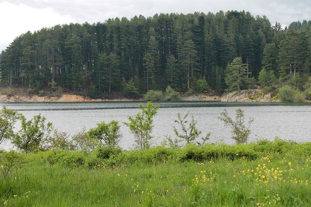 Sulle sponde del Lago Cecita, in c.da Cupone, Parco Nazionale della Sila - Ph. © Gianni Termine
