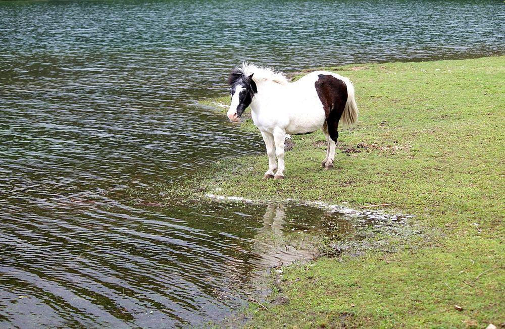 Cavallino in riva al Lago Cecita, in c.da Cupone, Parco Nazionale della Sila - Ph. © Gianni Termine