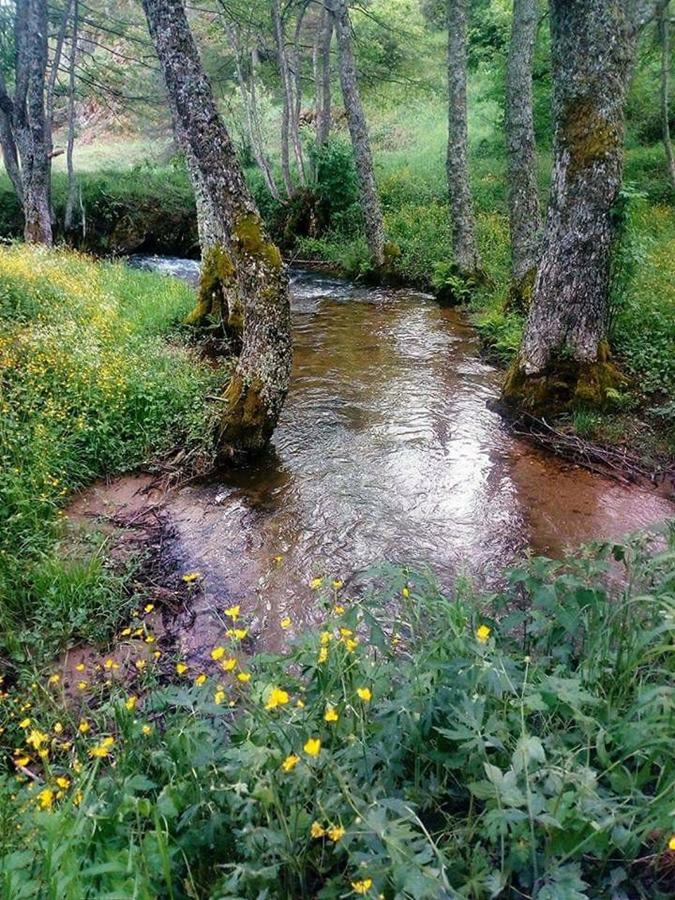 Tratto del Torrente Camigliati, Parco Nazionale della Sila - Ph. © Gianni Termine