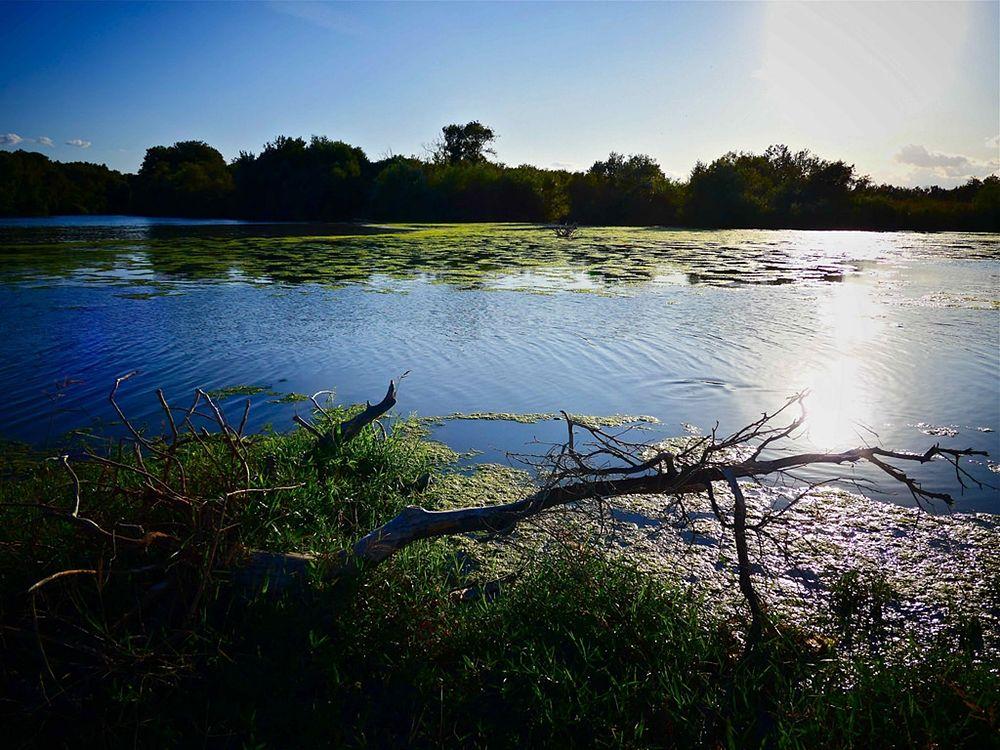 Tratto del fiume Crati presso la foce – Ph. © Stefano Contin
