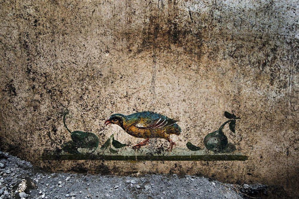 Affresco con pernice e pere, dalla Domus dei delfini - Image by Parco Archeologico di Pompei