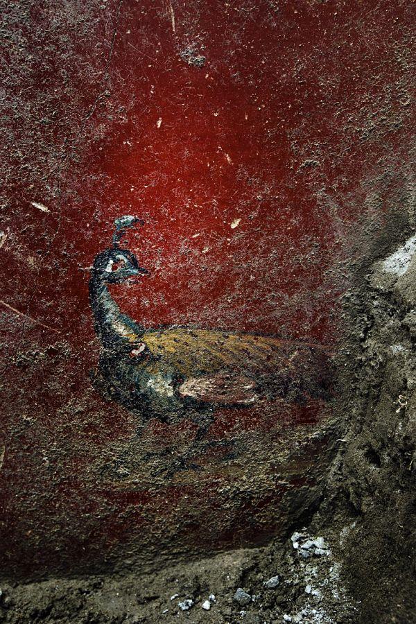 Affresco con pavone dalla Domus dei Delfini, I sec. d.C., Pompei - Image by Parco Archeologico di Pompei