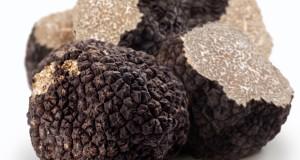 Le specie di tartufo del Pollino. Un grande valore per la biodiversità e l'economia della Calabria