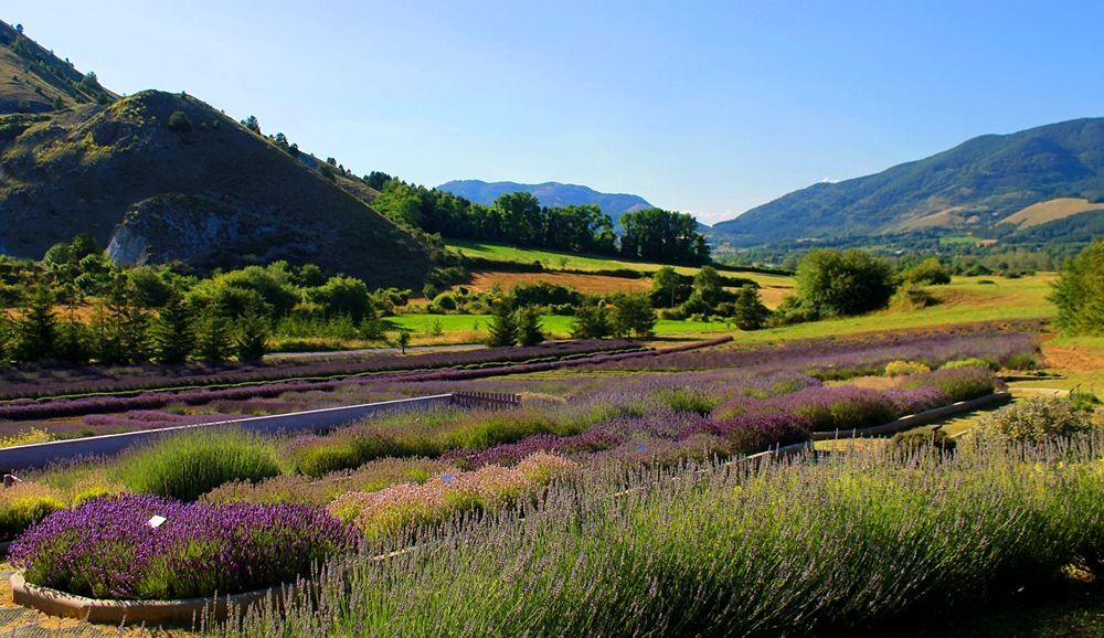 Un angolo del Parco della Lavanda e il suo contesto naturale, Campotenese (Morano Calabro, CS) - Ph. © Gianni Termine
