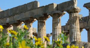 A Selinunte si miete il grano fra i resti archeologici. Pasta e cous cous avranno il logo del Parco