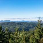 Storia del bosco e dei suoi prodotti in Calabria. La Sila, antica regina delle selve