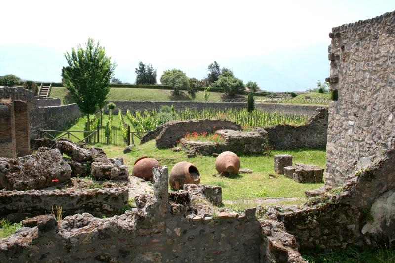 Vigneti e antichi dolia negli Scavi di Pompei - Image by Mastroberardino