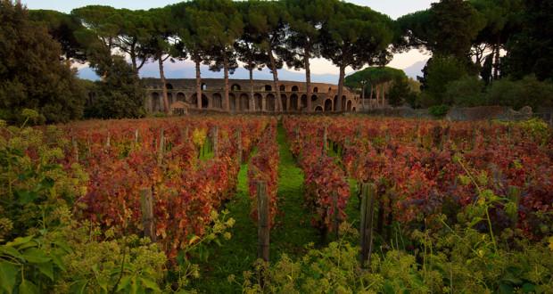 Vinum Vita Est. Fra le rovine di Pompei crescono le antiche uve da vino