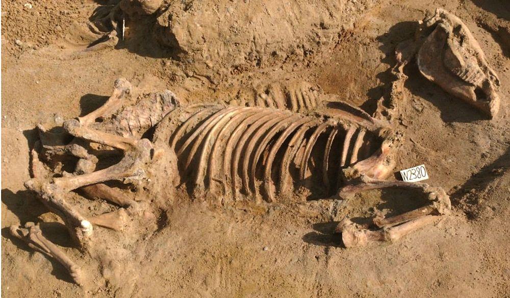 Una delle sepolture di cavalli ritrovate a Himera - Image by Soprintendenza Archeologica di Palermo