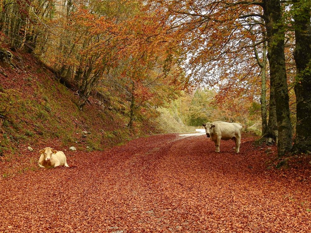 Scorcio autunnale nel Parco Nazionale del Pollino - Ph. © Stefano Contin