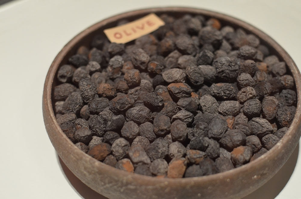 Olive carbonizzate da Pompei