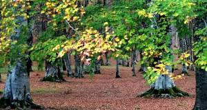 Visioni d'autunno nel Parco Nazionale del Pollino