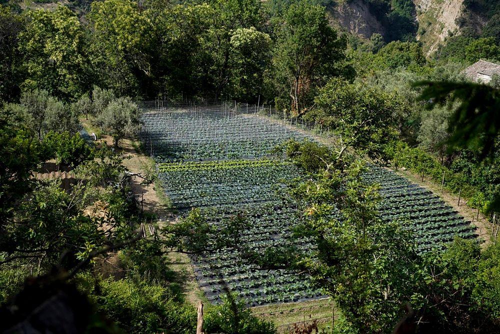 Uno dei terreni incolti recuperati da OrtoZero, progetto di Scherìa, Tiriolo (Cz)