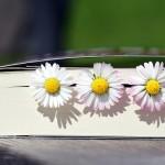 Rende Book Festival: nel cuore della citta bruzia tre giorni di narrativa, saggistica e fumetti