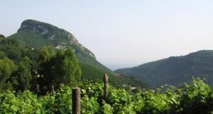 Quattordici etichette campane fra i migliori vini d'Italia secondo VITAE, la Guida Vini 2015 pubblicata dall'AIS