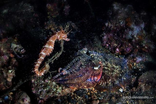 La bellezza 39 aliena 39 del cavalluccio marino fotografato for Immagini di cavalluccio marino