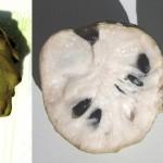 Alla scoperta dell'Annona cherimola, l'esotico frutto di Reggio Calabria