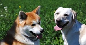 Dogville: un giovane cosentino lancia campagna di crowdfunding per creare un'oasi dedicata ai cani