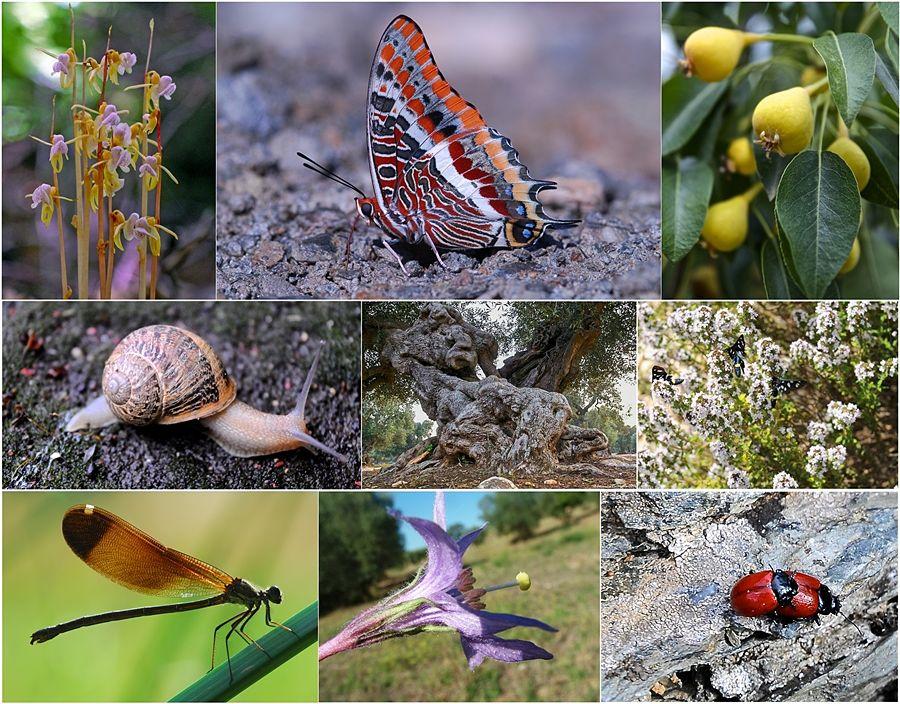 Esempi di biodiversità nel mondo animale e vegetale - Ph. Domenico Puntillo (1,2,6,7)  e Ferruccio Cornicello (3,4,5,9)