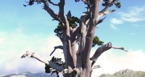 """Racconta il tuo SUD   Calabria: """"Ode al pino loricato"""". I versi di Pasqualino Bongiovanni interpretati dalla splendida voce di Aurora Cancian"""
