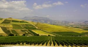 Quattordici etichette siciliane fra i migliori vini d'Italia secondo VITAE, la Guida Vini 2015 pubblicata dall'AIS
