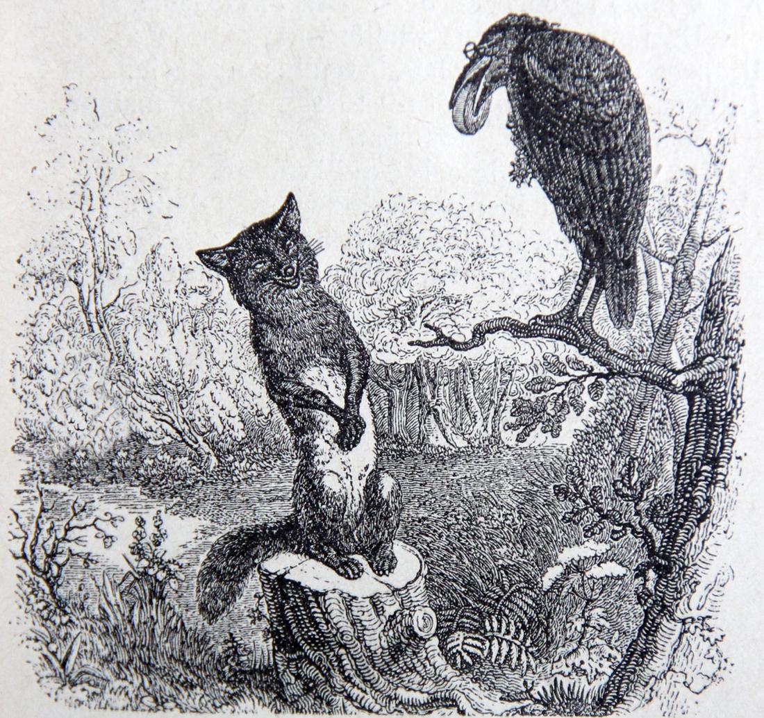 volpe corvo