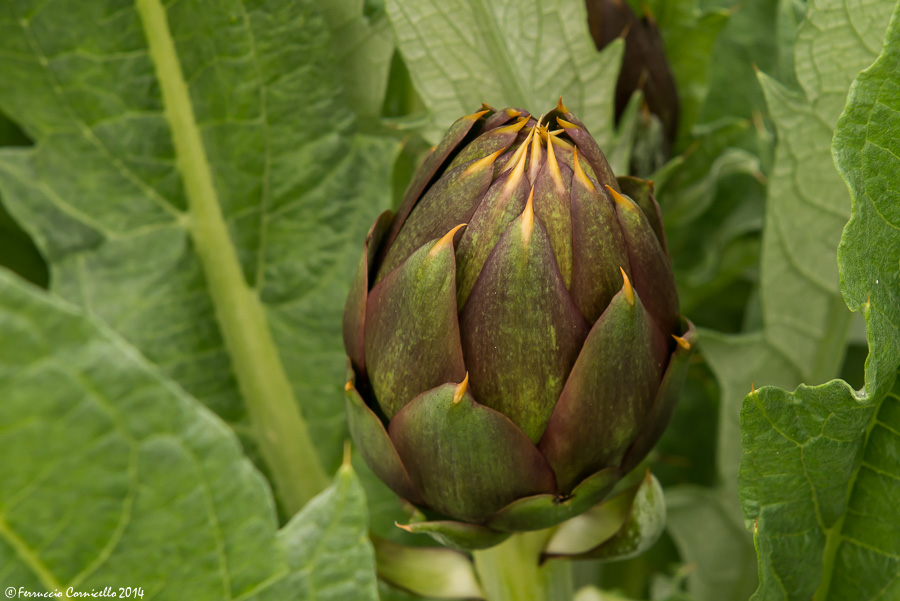 Aziende agroalimentari a Trinitapoli