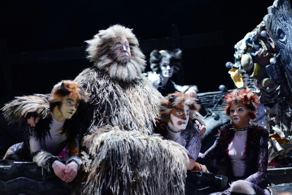 CATS: il musical di Andrew Lloyd Weber manda in delirio il pubblico del Petruzzelli ed è trionfo