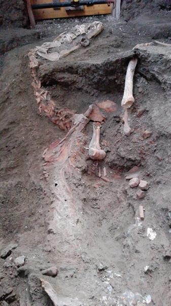 Cavallo a Pompei 2
