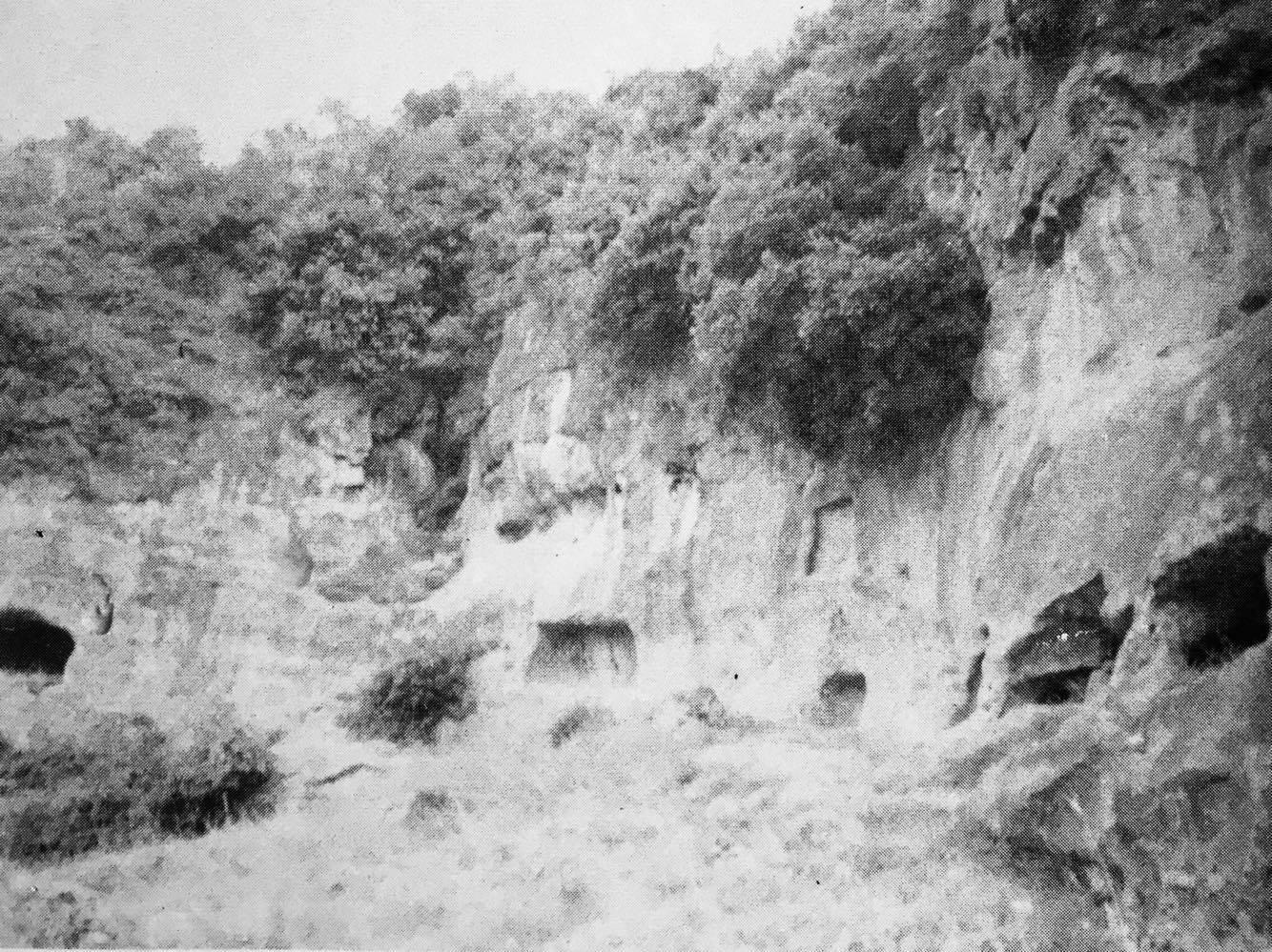 Elefante Campana 2