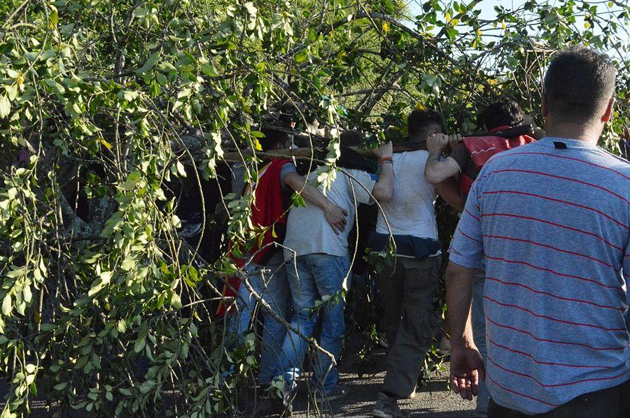 FARE festa. Suggestioni antropologiche sull'albero rituale del Maggio di Accettura